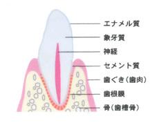 歯周病の症状と進み方